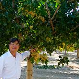 ピスタチオの木と鈴木社長